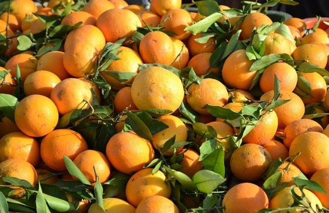 Апельсины в Абхазии на Новый год