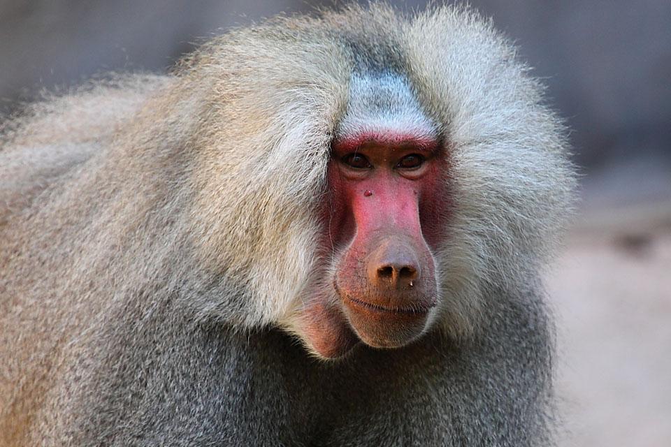 Питомник обезьян в Абхазии - Отдых в Сухуме