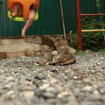 Детский кот - лучший отдых с детьми в Абхазии на Каштаке