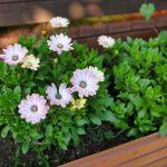 Цветы коттеджа №2