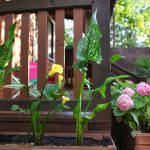 Цветы коттеджа №7