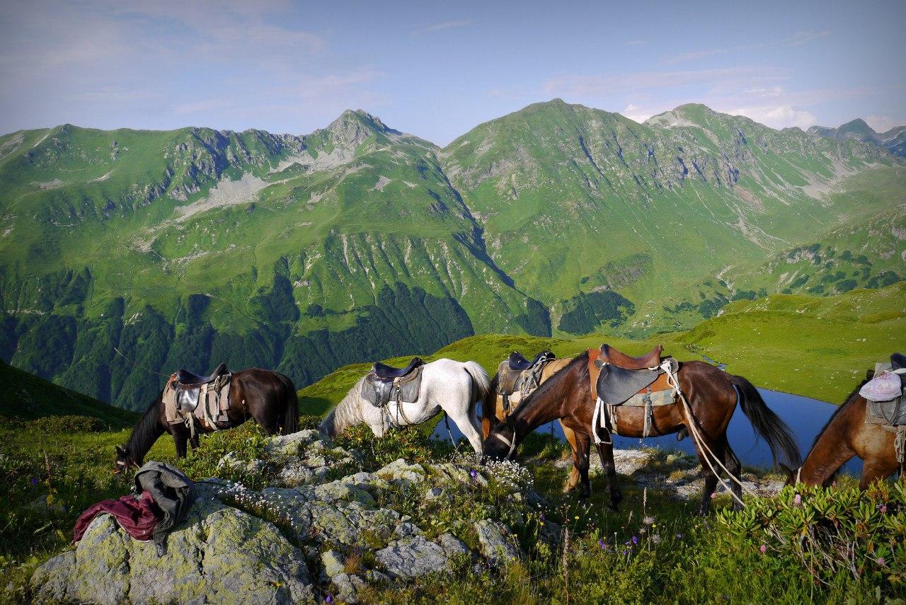 Прогулки на лошадях с детьми