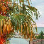 Пальмы с балкона коттеджа Каштак в Абхазии