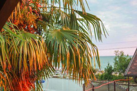 Пальмы с балкона коттеджа