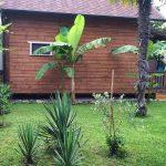 Банановые пальмы во дворе коттеджа Каштак в Абхазии