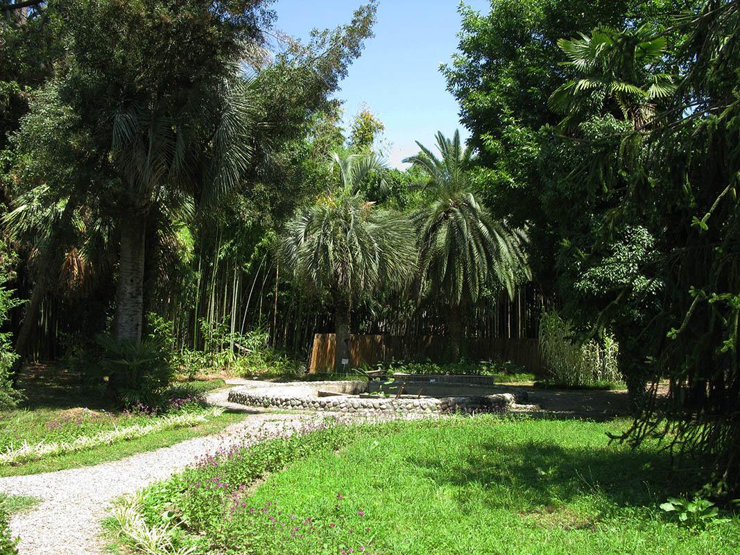 Сухумский ботанический сад с детьми